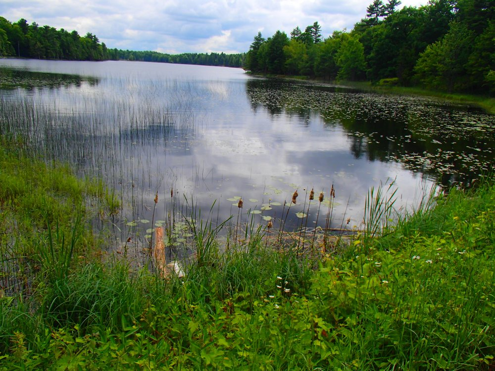 Beaver Pond at Murphys Point Park