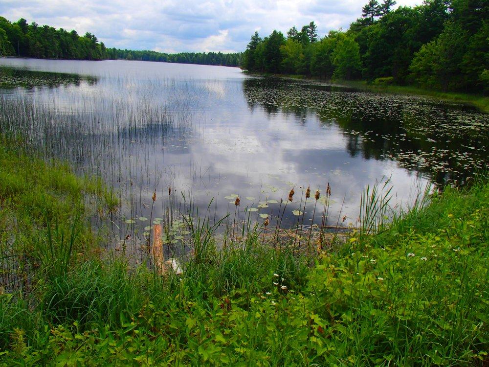 Beaver Pond at Murphys Point Park