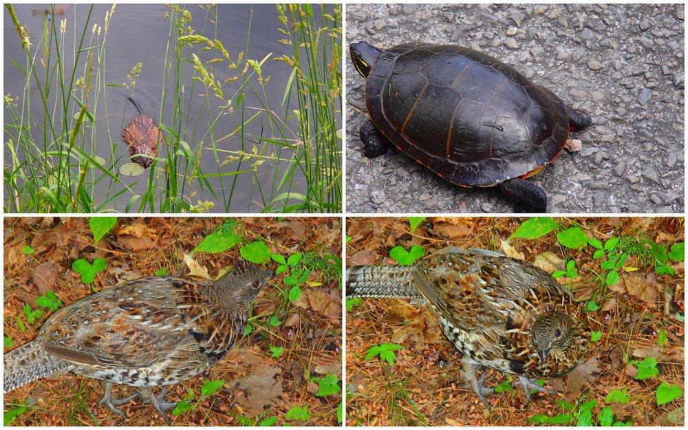 Wildlife at Murphys point provincial park
