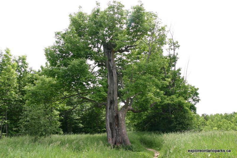 splittree2