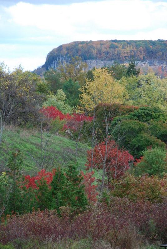 Halton conservation fall colour