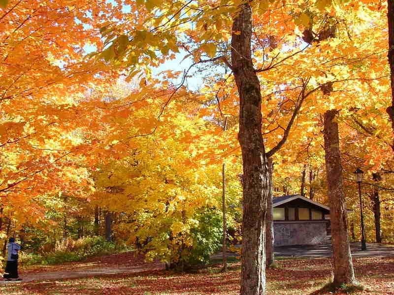West gate - Algonquin provincial park