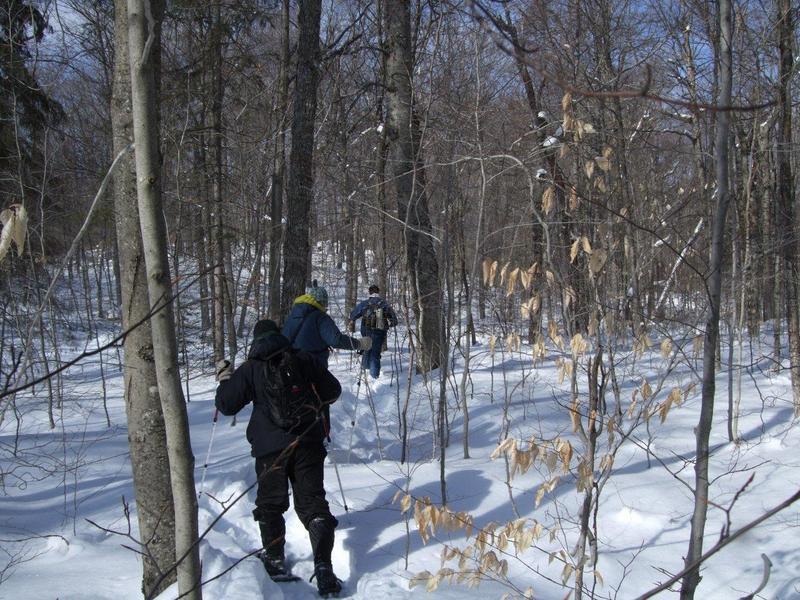 snowshoeing - algonquin