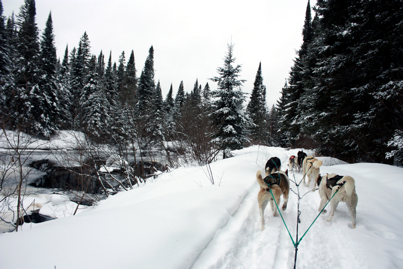 Dogsledding - algonquin - ontario