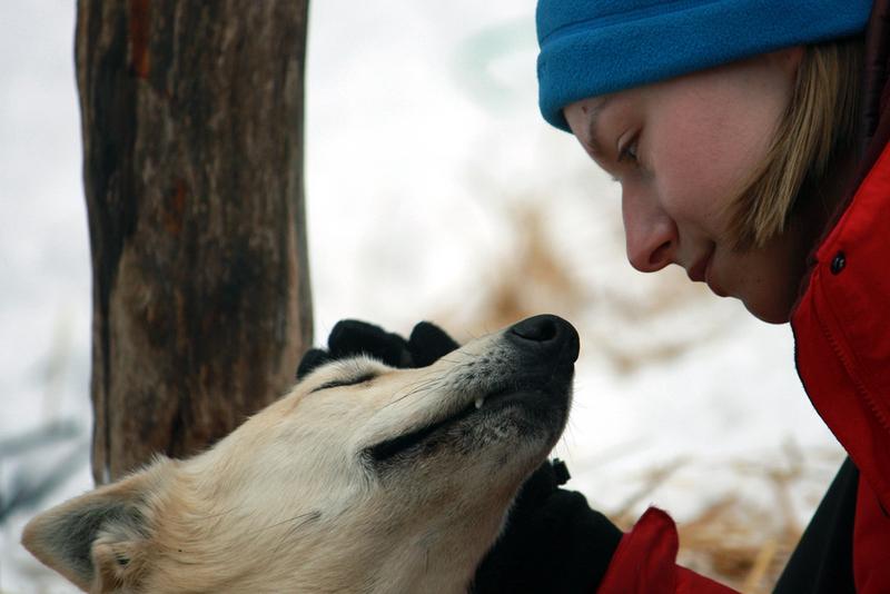 Dogsledding expedition - algonquin
