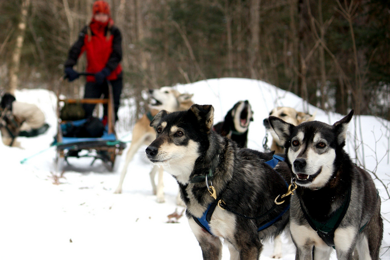 Dogsledding - chocpaw expedition - algonquin