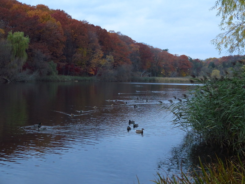 Grenadier Pond - High Park - Toronto
