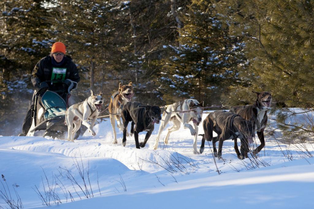 Dogsledding - Kearney near Algonquin