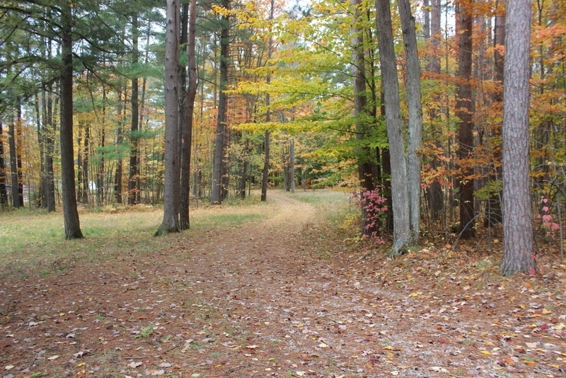 springwater provincial park fall colours