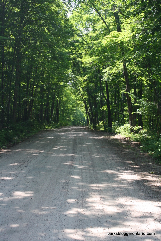 Brent campground road in Algonquin