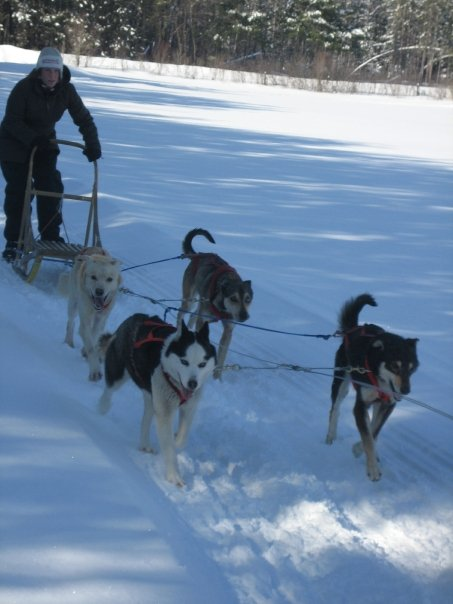Dog sledding adrenaline - Alice - Ontario