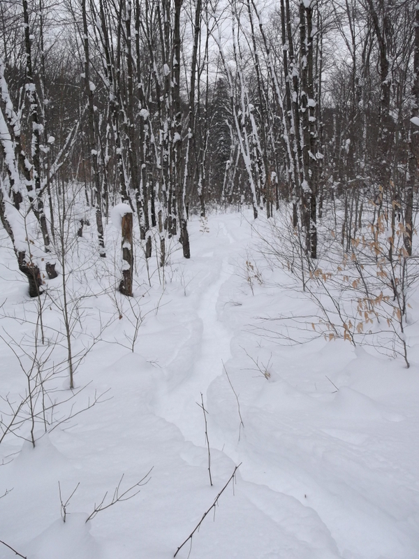 Western Uplands trail - Algonquin