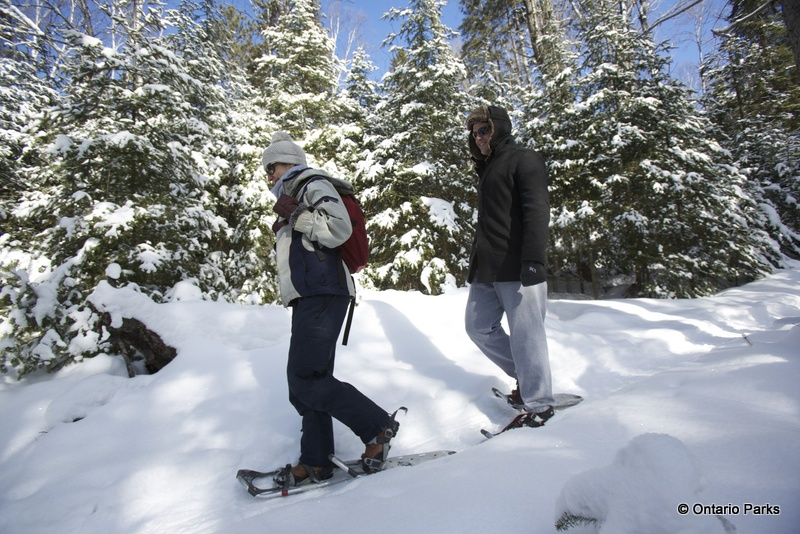 Snowshoe excursions - Algonquin - Winter in the wild festival